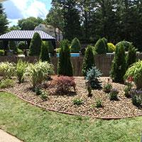 Hattoys Plants Trees & Shrubs
