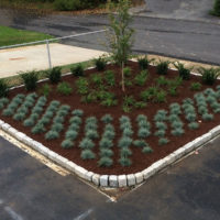 Hattoy's Commercial Parking Lot Landscaping