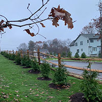 Hattoy's installs evergreen shrubs