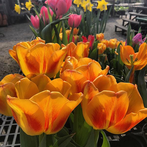Hattoy's Nursery, Landscaping & Garden Center