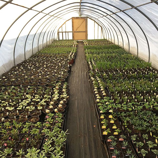 Hattoy's Nursery grows many of their own plants