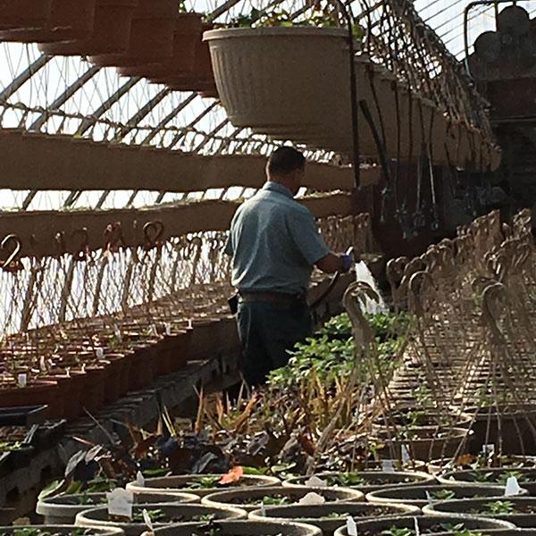 Hattoy's Greenhouses & Garden Center